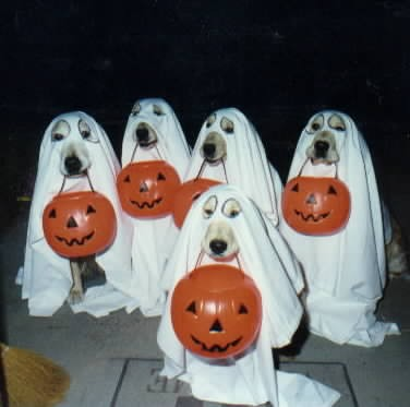 halloween doggies